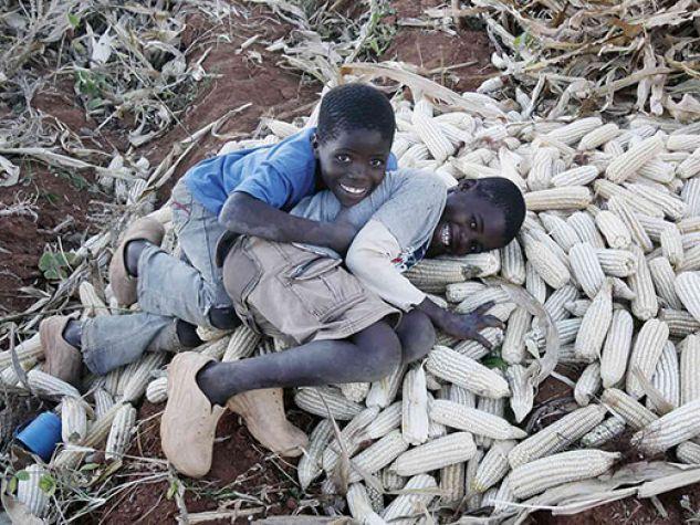 Bambini in Malawi durante la raccolta del mais