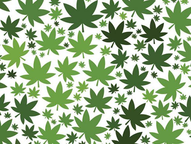 Salute. Canne e cannabis, maggio 2019.