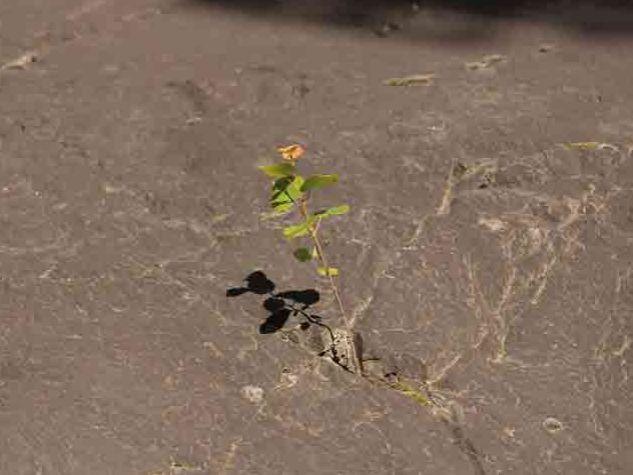 fiore nato tra le pieghe della pietra
