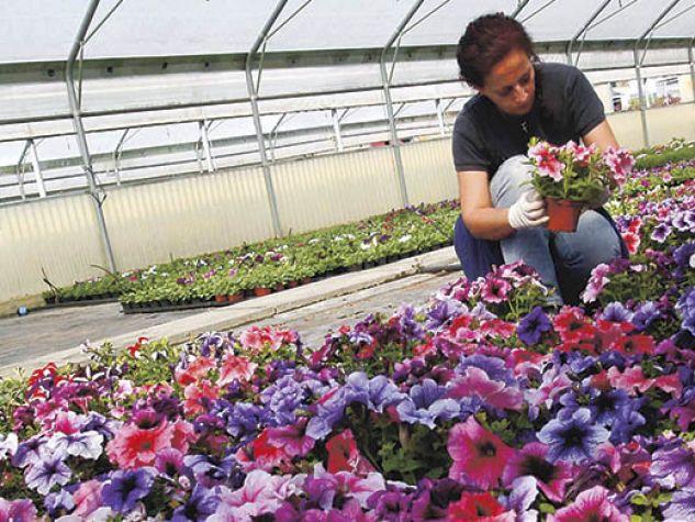 coltivazione di fiori in cooperativa