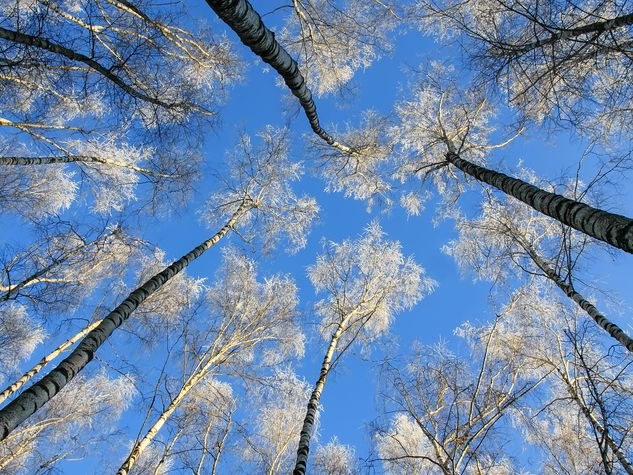 un cielo azzurro visto dal basso