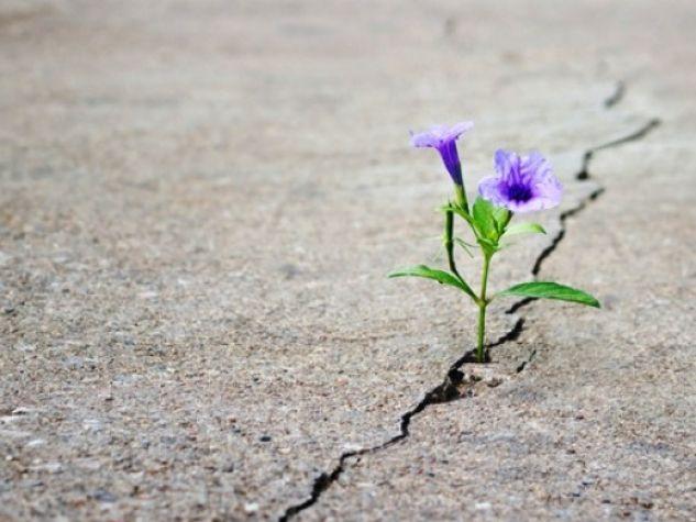 fiore cresciuto sull'asfalto