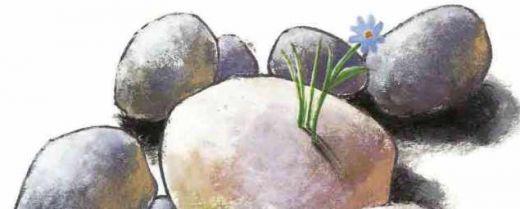 fiore sboccia tra le pietre illustrazione