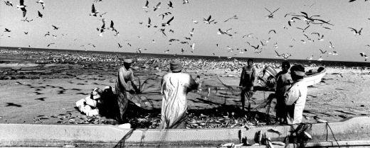 Al Had, dove volano i gabbiani