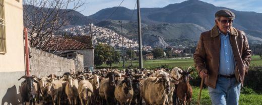 La scuola della pastorizia