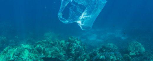 Un sacchetto di plastica incombe sopra un gruppo di coralli.