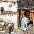 Una vita sul filo - Le baracche sono spesso a pochi centimetri dal binario, eppure le donne svolgono i lavori di casa e curano i pochi animali come in qualsiasi villaggio dell'India.