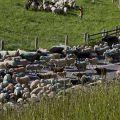 Pecore e uomini si erano dati appuntamento a Maso Corto, in Alta Val Senales.  - Aldo e Marco Pavan