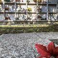 Impossibile dimenticare la tragedia del terremoto. Al cimitero i 400 morti di Gemona sono ricordati con la data di nascita e una foto. - ©Andrea Semplici