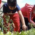 Ragazzi, tocca a voi!  - Accanto alle scuole verdi nascono gli orti scolastici. I bambini non solo imparano a coltivare ma anche a migliorare l'alimentazione introducendo più verdure.