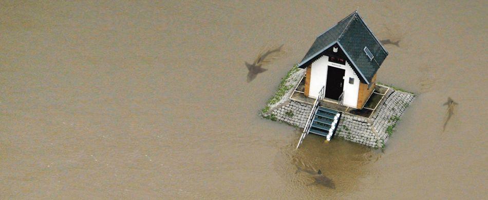 casa attorniata dagli squali