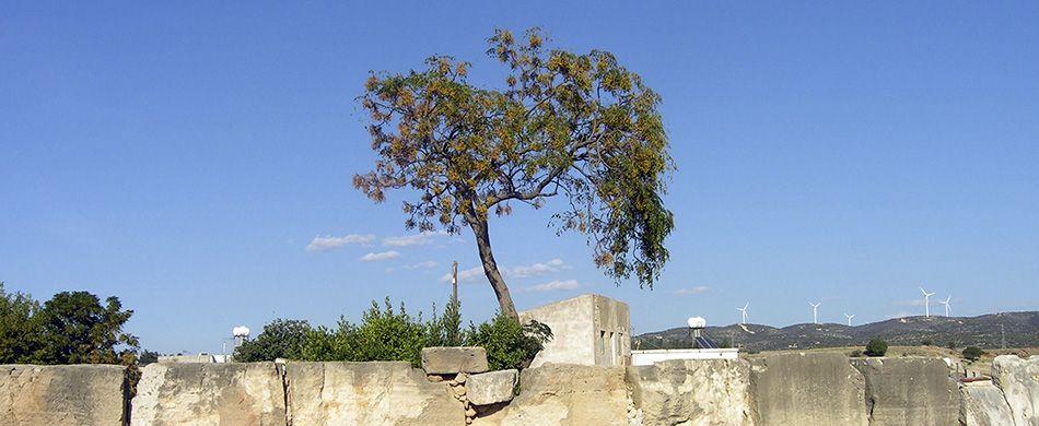 imprudente novembre 2020 l'albero della pazienza